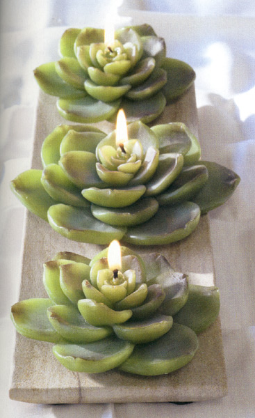 eco candles 600 Savoring Succulents